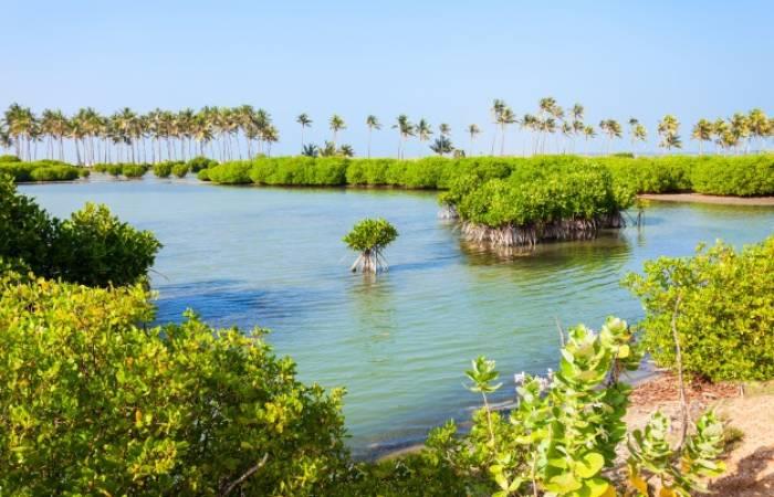 Mangrove Forests -Natural Vegetation