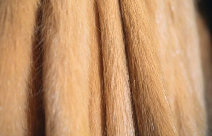 Nutria Fur