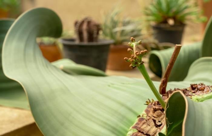 Rarest Plants